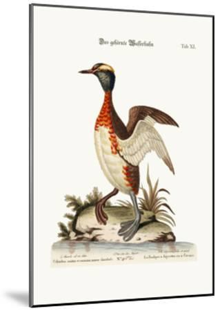 The Eared or Horned Dobchick, 1749-73-George Edwards-Mounted Giclee Print