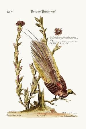 The Greater Bird of Paradise, 1749-73-George Edwards-Stretched Canvas Print