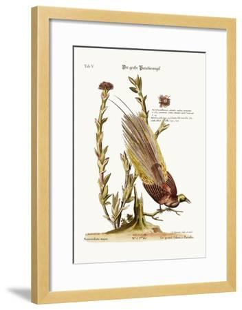 The Greater Bird of Paradise, 1749-73-George Edwards-Framed Giclee Print