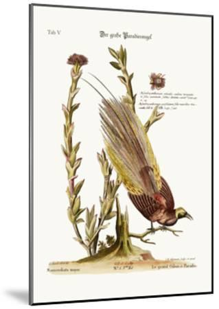 The Greater Bird of Paradise, 1749-73-George Edwards-Mounted Giclee Print