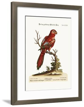 The Long-Tailed Scarlet Lory, 1749-73-George Edwards-Framed Giclee Print