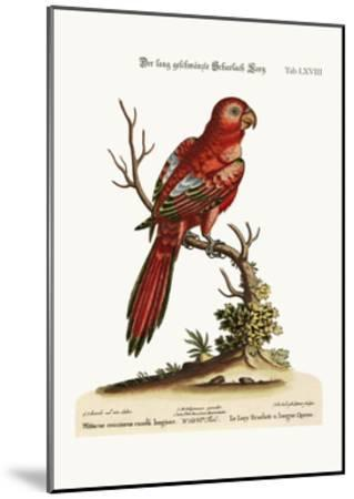 The Long-Tailed Scarlet Lory, 1749-73-George Edwards-Mounted Giclee Print