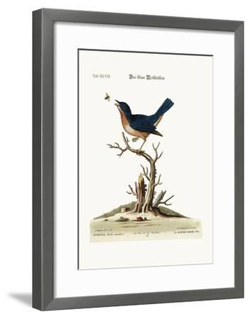 The Blue Red-Breast, 1749-73-George Edwards-Framed Giclee Print