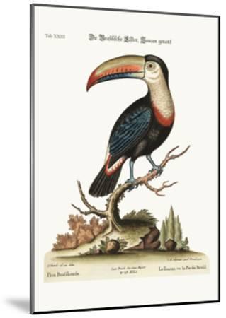 The Toucan or Brasilian Pye, 1749-73-George Edwards-Mounted Giclee Print