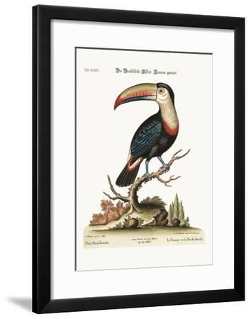 The Toucan or Brasilian Pye, 1749-73-George Edwards-Framed Giclee Print