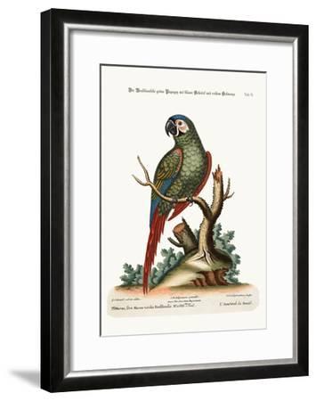 The Brasilian Green Maccaw, 1749-73-George Edwards-Framed Giclee Print