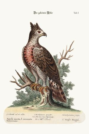 The Crowned Eagle, 1749-73-George Edwards-Stretched Canvas Print
