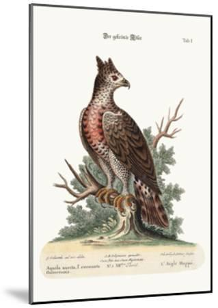 The Crowned Eagle, 1749-73-George Edwards-Mounted Giclee Print