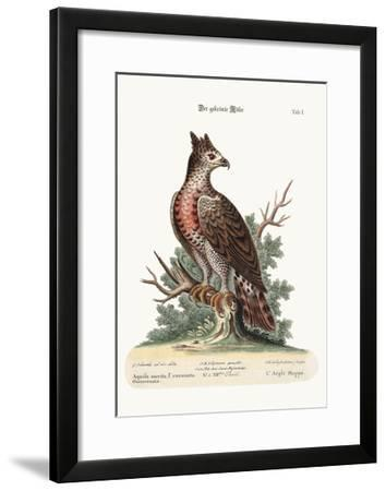 The Crowned Eagle, 1749-73-George Edwards-Framed Giclee Print