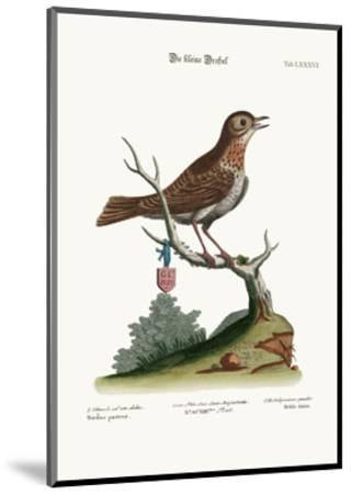 The Little Thrush, 1749-73-George Edwards-Mounted Giclee Print
