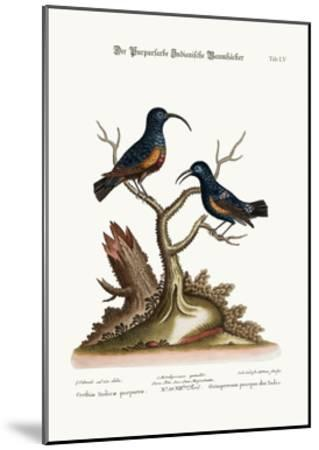 The Purple Indian Creepers, 1749-73-George Edwards-Mounted Giclee Print