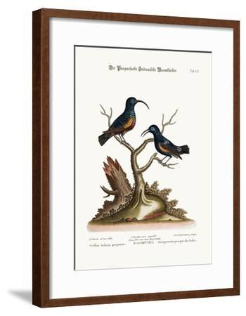 The Purple Indian Creepers, 1749-73-George Edwards-Framed Giclee Print