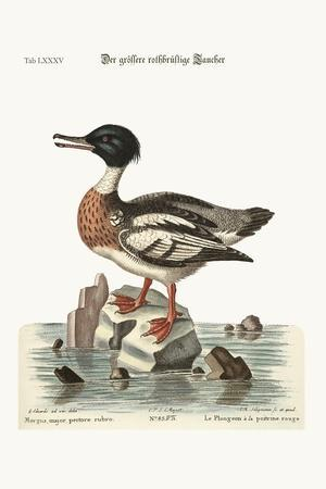 The Red-Breasted Goosander, 1749-73-George Edwards-Stretched Canvas Print