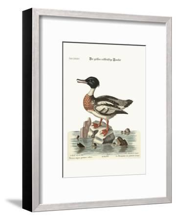 The Red-Breasted Goosander, 1749-73-George Edwards-Framed Giclee Print