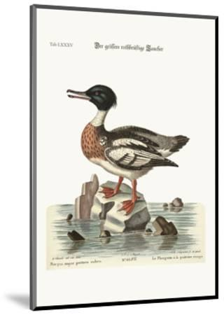The Red-Breasted Goosander, 1749-73-George Edwards-Mounted Giclee Print