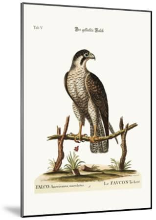 The Spotted Hawk or Falcon, 1749-73-George Edwards-Mounted Giclee Print