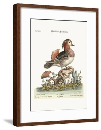 The Cinese Teal, 1749-73-George Edwards-Framed Giclee Print