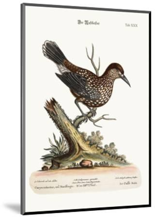 The Nut-Cracker, 1749-73-George Edwards-Mounted Giclee Print