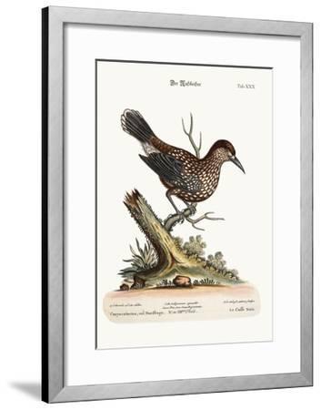 The Nut-Cracker, 1749-73-George Edwards-Framed Giclee Print