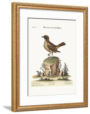 The Schomburger, 1749-73-George Edwards-Framed Giclee Print