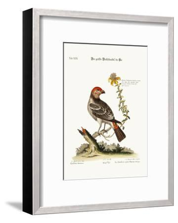 The Greatest Bulfinch-Hen, 1749-73-George Edwards-Framed Giclee Print
