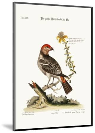 The Greatest Bulfinch-Hen, 1749-73-George Edwards-Mounted Giclee Print