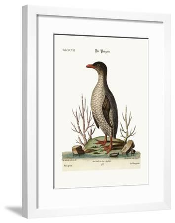 The Penguin, 1749-73-George Edwards-Framed Giclee Print