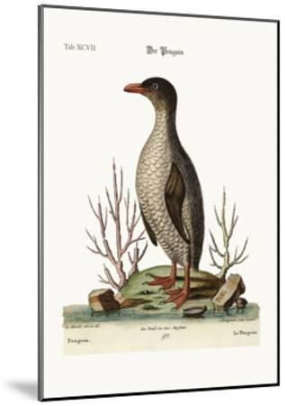 The Penguin, 1749-73-George Edwards-Mounted Giclee Print