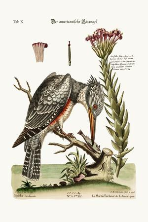 The American Kingfisher, 1749-73-George Edwards-Stretched Canvas Print