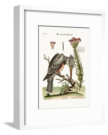 The American Kingfisher, 1749-73-George Edwards-Framed Giclee Print