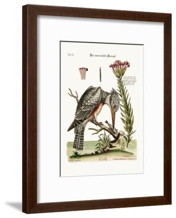 The American Kingfisher, 1749-73-George Edwards-Framed Giclee Print