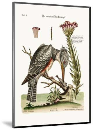 The American Kingfisher, 1749-73-George Edwards-Mounted Giclee Print
