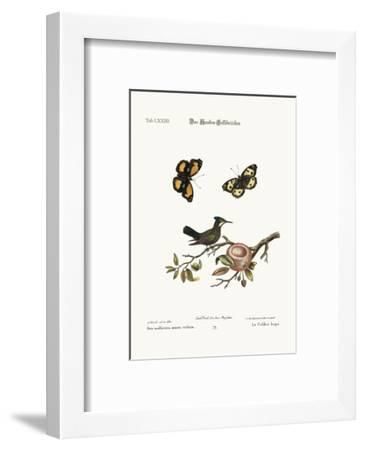 The Crested Hummingbird, 1749-73-George Edwards-Framed Giclee Print