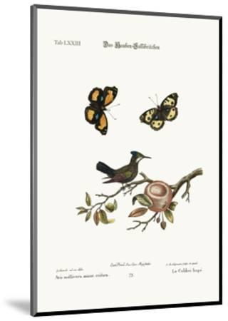 The Crested Hummingbird, 1749-73-George Edwards-Mounted Giclee Print