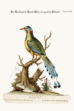 The Brasilian Saw-Billed Roller, 1749-73-George Edwards-Stretched Canvas Print