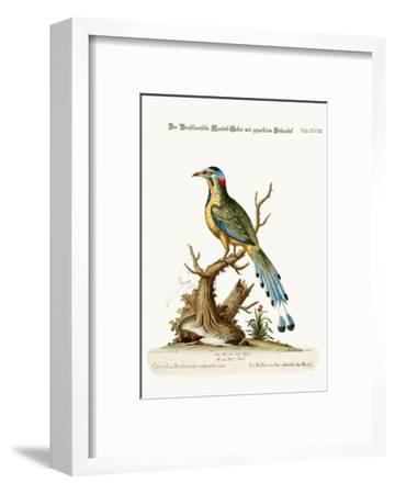 The Brasilian Saw-Billed Roller, 1749-73-George Edwards-Framed Giclee Print