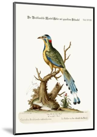 The Brasilian Saw-Billed Roller, 1749-73-George Edwards-Mounted Giclee Print