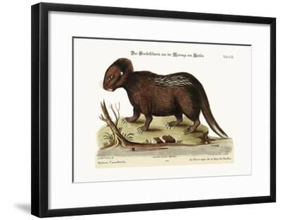 The Porcupine from Hudson's Bay, 1749-73-George Edwards-Framed Giclee Print