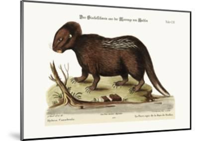 The Porcupine from Hudson's Bay, 1749-73-George Edwards-Mounted Giclee Print