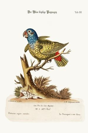 The Blue-Headed Parrot, 1749-73-George Edwards-Stretched Canvas Print