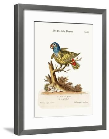 The Blue-Headed Parrot, 1749-73-George Edwards-Framed Giclee Print
