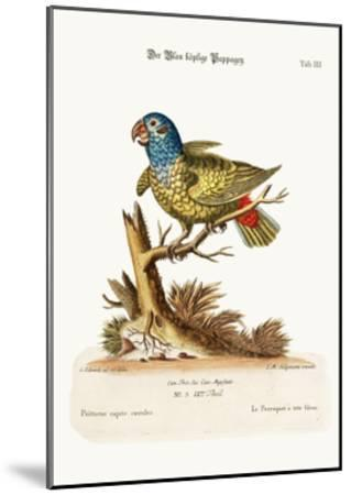 The Blue-Headed Parrot, 1749-73-George Edwards-Mounted Giclee Print