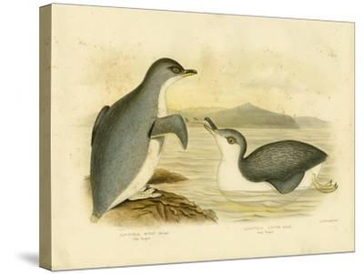 Little Penguin, 1891-Gracius Broinowski-Stretched Canvas Print