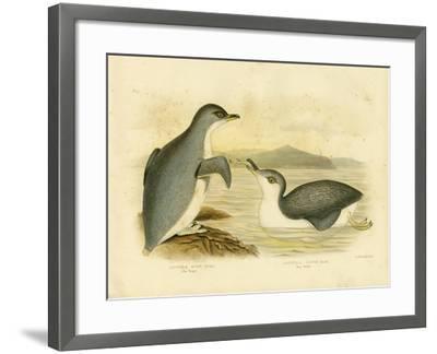 Little Penguin, 1891-Gracius Broinowski-Framed Giclee Print