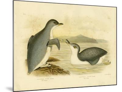 Little Penguin, 1891-Gracius Broinowski-Mounted Giclee Print