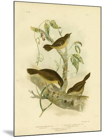 Allied Scrubwren or White-Browed Scrubwren, 1891-Gracius Broinowski-Mounted Giclee Print