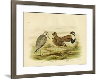 Black-Breasted Plover, 1891-Gracius Broinowski-Framed Giclee Print