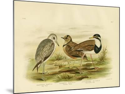 Black-Breasted Plover, 1891-Gracius Broinowski-Mounted Giclee Print