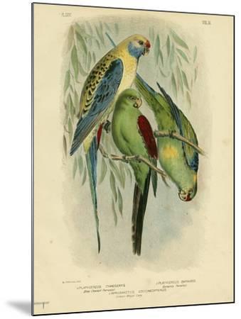 Blue-Cheeked Parakeet, 1891-Gracius Broinowski-Mounted Giclee Print
