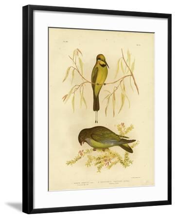 Australian Bee-Eater or Rainbow Bee-Eater, 1891-Gracius Broinowski-Framed Giclee Print